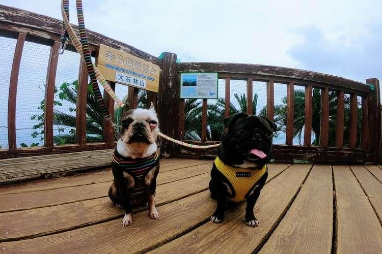 沖縄占いチュチュの看板犬ラブ&ピース