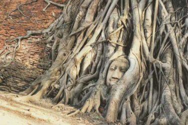 心が満たされる前世の記憶|タイ・アユタヤ遺跡