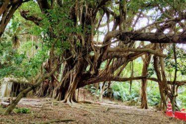 沖縄各地のパワースポット【運気アップのご利益パワー】のご紹介
