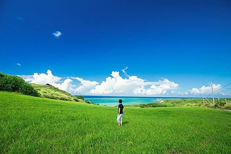 沖縄の草原