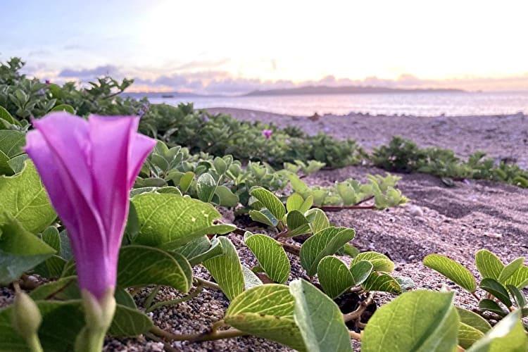 ホワイトビーチの朝日と花