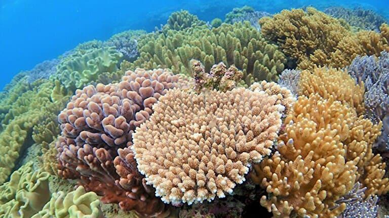 海人倶楽部さん提供の読谷沖のサンゴ礁